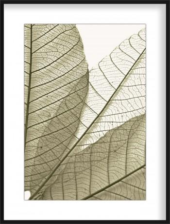 Quadro Joined Leaves II