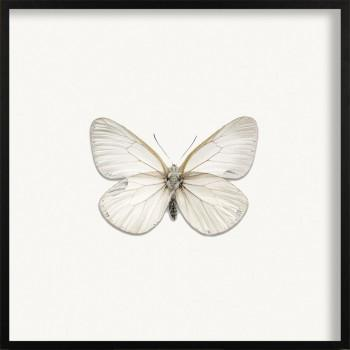 Quadro Highlighted Butterfly II