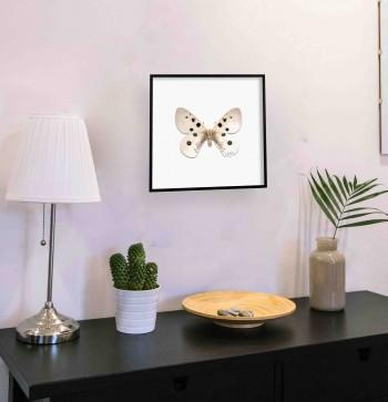 Quadro Highlighted Butterfly III