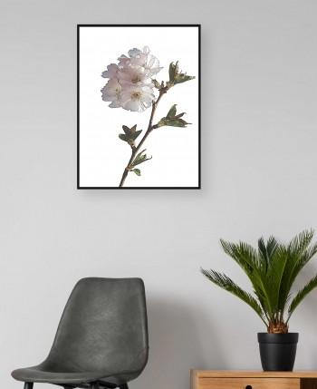 Quadro Drawn Flower V
