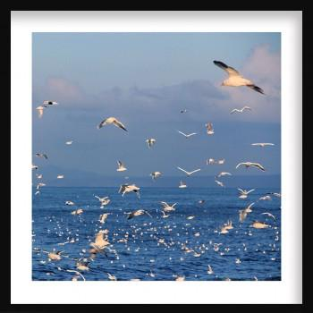 Quadro Sea Gull Flock