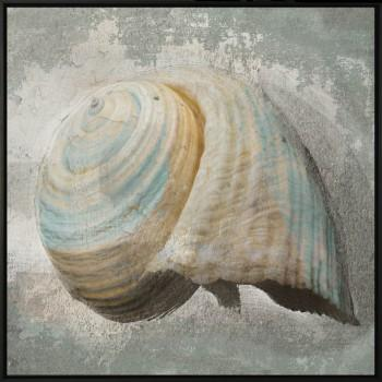 Tela Shell of The Sea 1