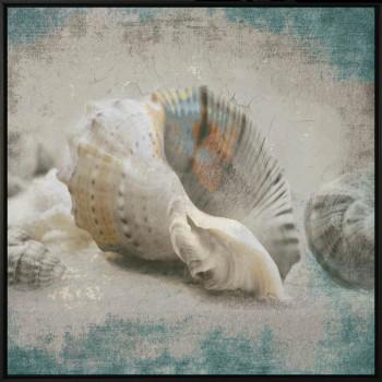 Tela Shell of The Sea 3
