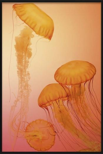 Quadro Colored Jellyfish II
