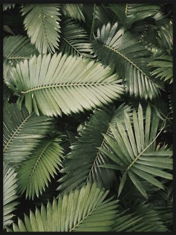 Quadro Be like a Palm Tree