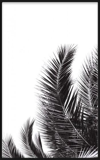 Quadro P&B Palm Tree